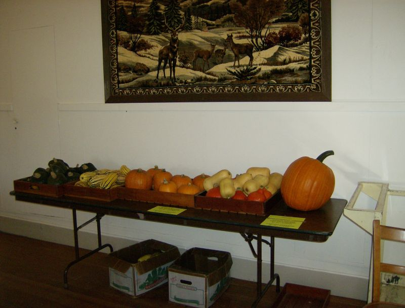winter squash for sale...