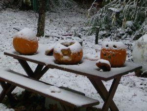 snow on the halloween pumpkins